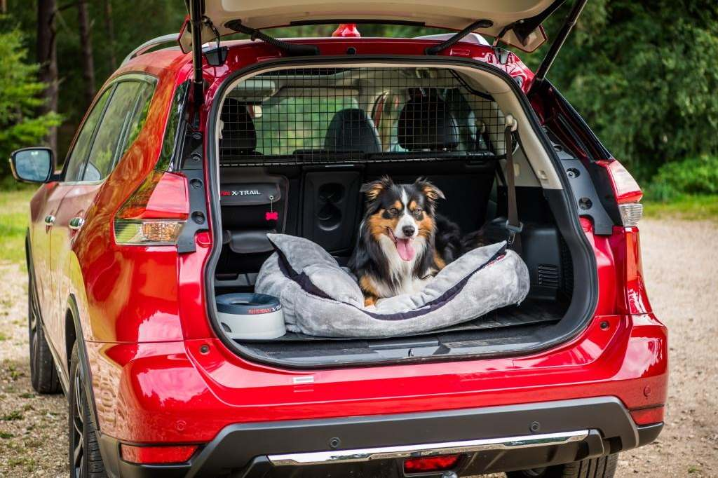 Best Dog-Friendly Car of the Year